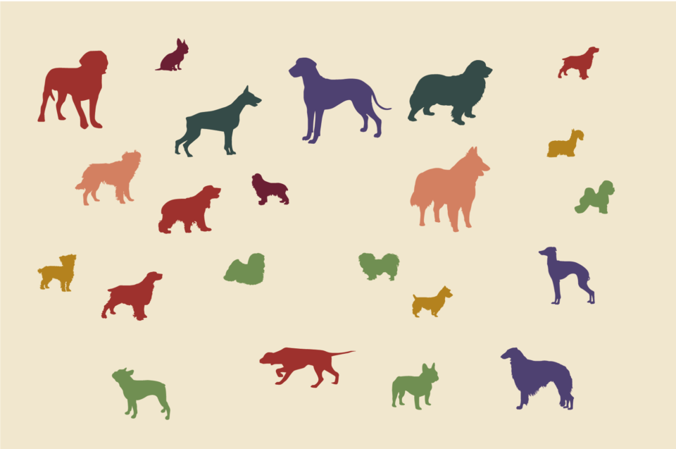 Best in Show – What's the Best Dog Breed, According to Data